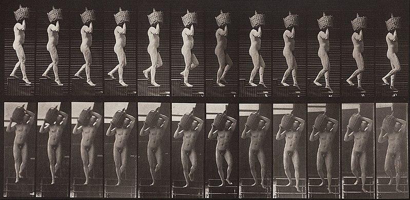 File:Eadweard Muybridge - Animal Locomotion, Plate 136 - Google Art Project.jpg