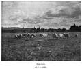 Eames ca1893 BostonCameraClub.png