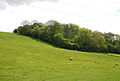 Edge of Park Wood in Coombe Bottom - geograph.org.uk - 444543.jpg