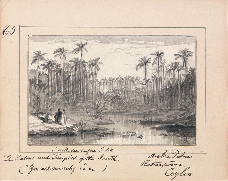 "File:Edward Lear - Illustration to Tennyson's ""You Ask Me Why""- Areka Palms, Ratanapooru, Ceylon - `I will see before I... - Google Art Project.jpg"