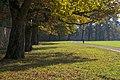Eichenreihe im Schlosspark Hellbrunn.jpg