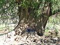 El Sabinal, Salto de los Salado, Aguascalientes 16.JPG
