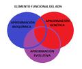 Elementos funcionales del ADN.png