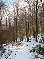 Elm Hag Wood - geograph.org.uk - 734932.jpg