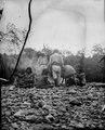 En grupp människor vid en lägereld. Sydamerika. Bolivia - SMVK - 002344.tif