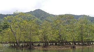 Chocó-Darién moist forests A Choco- Darien moist forests