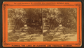 Entrance to St. Augustine, through an archway of Pride of India and Live Oak trees, from Robert N. Dennis collection of stereoscopic views 4.png