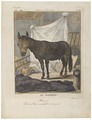 Equus hinnus - 1700-1880 - Print - Iconographia Zoologica - Special Collections University of Amsterdam - UBA01 IZ21700063.tif