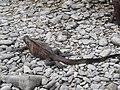Espanola - Hood - Galapagos Islands - Ecuador (4870942785).jpg