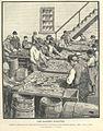 FMIB 35812 Sardine Industry.jpeg
