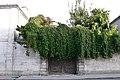 Façade avec des plantes de la maison numéro 37 rue Admirault (2).JPG