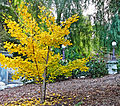 Falling Leaves, Kimberly Crest 12-15 (22939133104).jpg