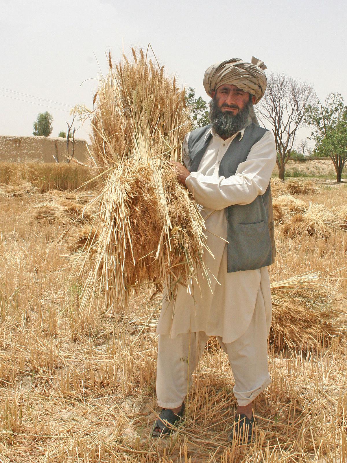 Essay on pakistani farmer