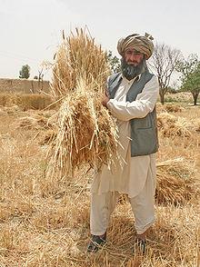 Pakistani Village Life Wikipedia