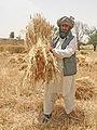 Farmer in Pakistan.jpg
