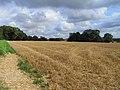 Farmland, Upper Lambourn - geograph.org.uk - 1575350.jpg