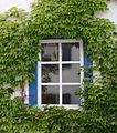 Fenster Schauernheim.jpg