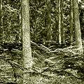 Fernwood (42512262294).jpg
