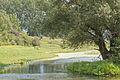 Feuchtgebiet in der Nähe des Linner Staus der Maas.jpg