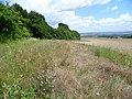 Field edge at foot of North Downs - geograph.org.uk - 2541985.jpg