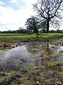 Figham - geograph.org.uk - 759879.jpg