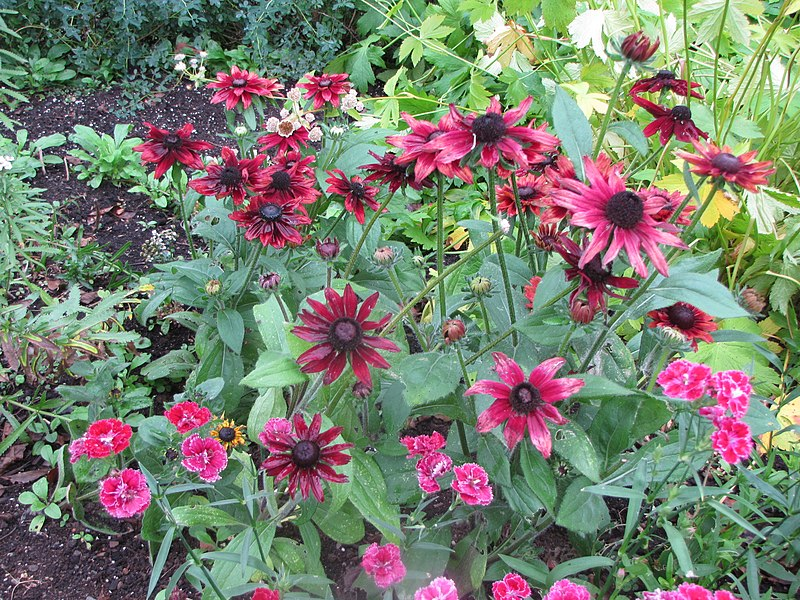 File:Fleurs d'automne, à la Villa Estevan, aux Jardins de Métis, Grand-Métis, Québec - panoramio.jpg