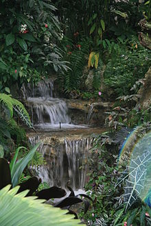 a waterfall in the butterfly rainforest - Uf Butterfly Garden