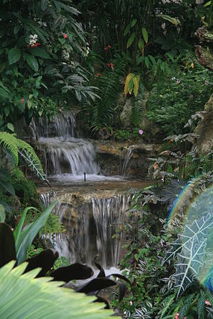 Florida Museum of Natural History - A waterfall in the Butterfly Rainforest.