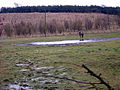 Flooded Field Near Todsbughts - geograph.org.uk - 147250.jpg