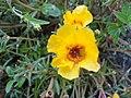 Flores amarilla.JPG