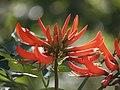 Flower (259372867).jpg