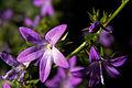 Flower (4016604245).jpg