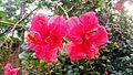 Flower (7).jpg