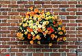 Flower basket Goodnestone Dover Kent England.jpg