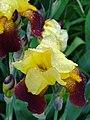 Flower en route to Farm Tomita - Nakafurano - Hokkaido - Japan - 01 (48006120977).jpg