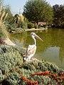 Flower garden in Karaj - panoramio (2).jpg