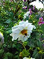 Flower with honey bee.jpg