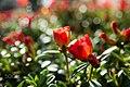 Flowers And Sunrise (115991661).jpeg