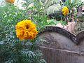 Flowers in my home.jpg