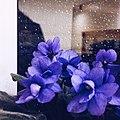 Flowers macro 3.jpg