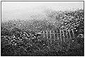 Foggy island (Graciosa, Azores, Portugal) (48544503481).jpg