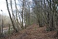 Footpath by the railway, Lower Hucksteep Wood - geograph.org.uk - 1726932.jpg