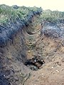 Footpath erosion - geograph.org.uk - 311962.jpg