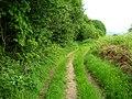 Footpath in Spring - geograph.org.uk - 1341609.jpg