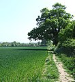 Footpath through Fields, The Hobbins, Shropshire - geograph.org.uk - 423476.jpg