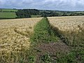 Footpath through the crops - geograph.org.uk - 1557214.jpg