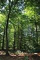 Forêt de Bon-Secours 06.jpg
