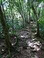 Forest Path - Tikal Archaeological Site - Peten - Guatemala - 02 (15685668029).jpg