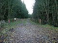 Forest Track into Stonehill Wood - geograph.org.uk - 283789.jpg