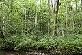 Forest in Mt.Gozen (Ibaraki) 05.jpg